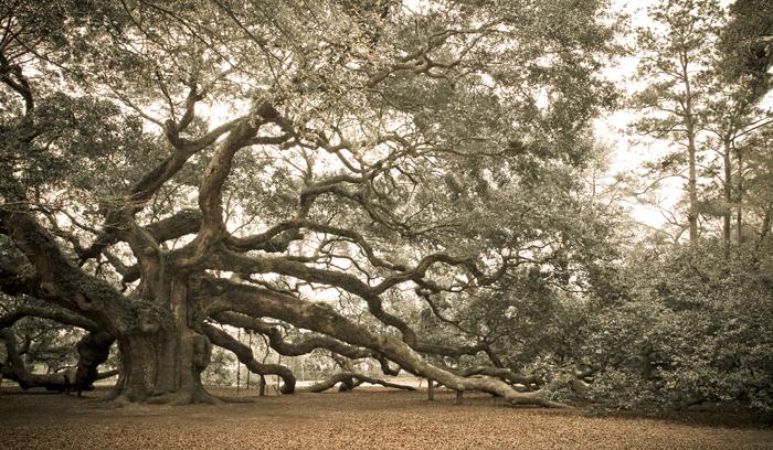 angel oak © Mike Nocher